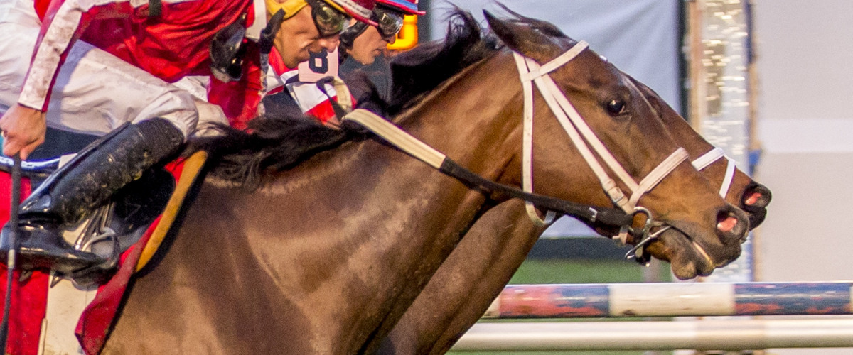 Chasing Churchill Downs: The Road to the Kentucky Derby