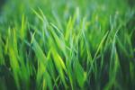 Grass Cutting Stories