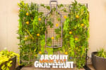 Launch Party for Absolut Grapefruit