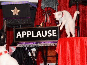 The Cat?s Out of the Bag: The Amazing Acro-Cats are Back in New Orleans!