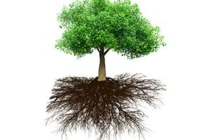Security Principle #3 - Cut Roots, Not Branches