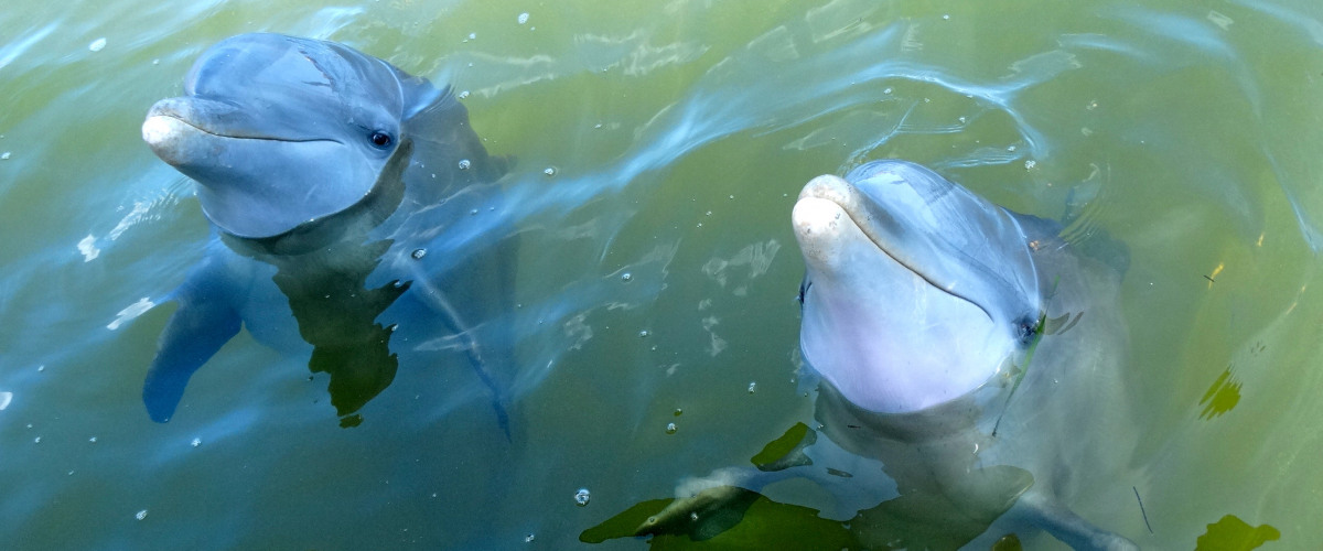 Dolphins and Sea Turtles and Stingrays (Oh My
