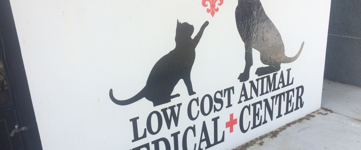 New Orleans Animals Need Checkups, Too