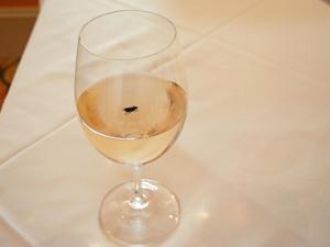 A Black Fly in My Chardonnay