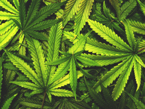 Going Green: Louisiana Gets a Marijuana Dispensary