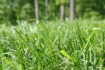 Benefits of Growing Bermuda Grass