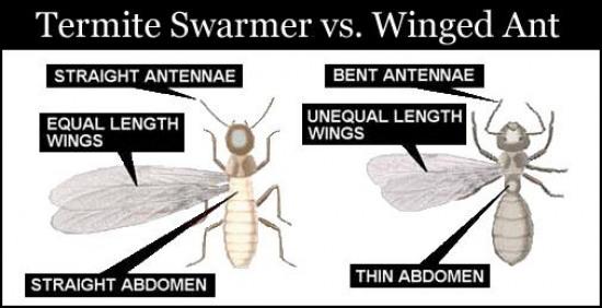 Our Termite Guarantee